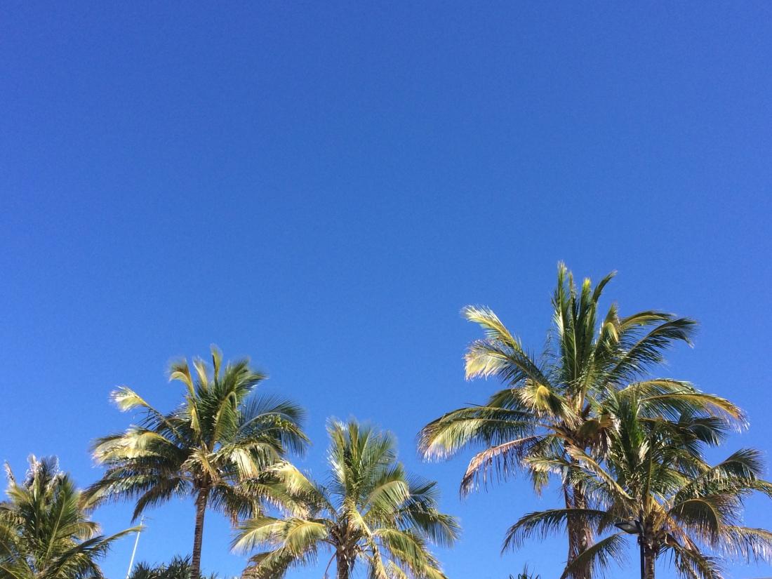 Palm Trees Noosa Main Beach Australia