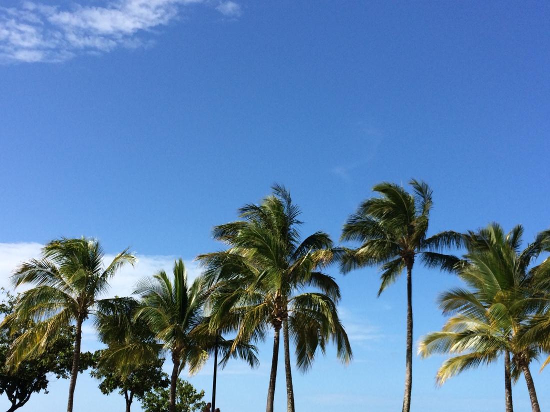 Airlie Beach Australia Palm Trees