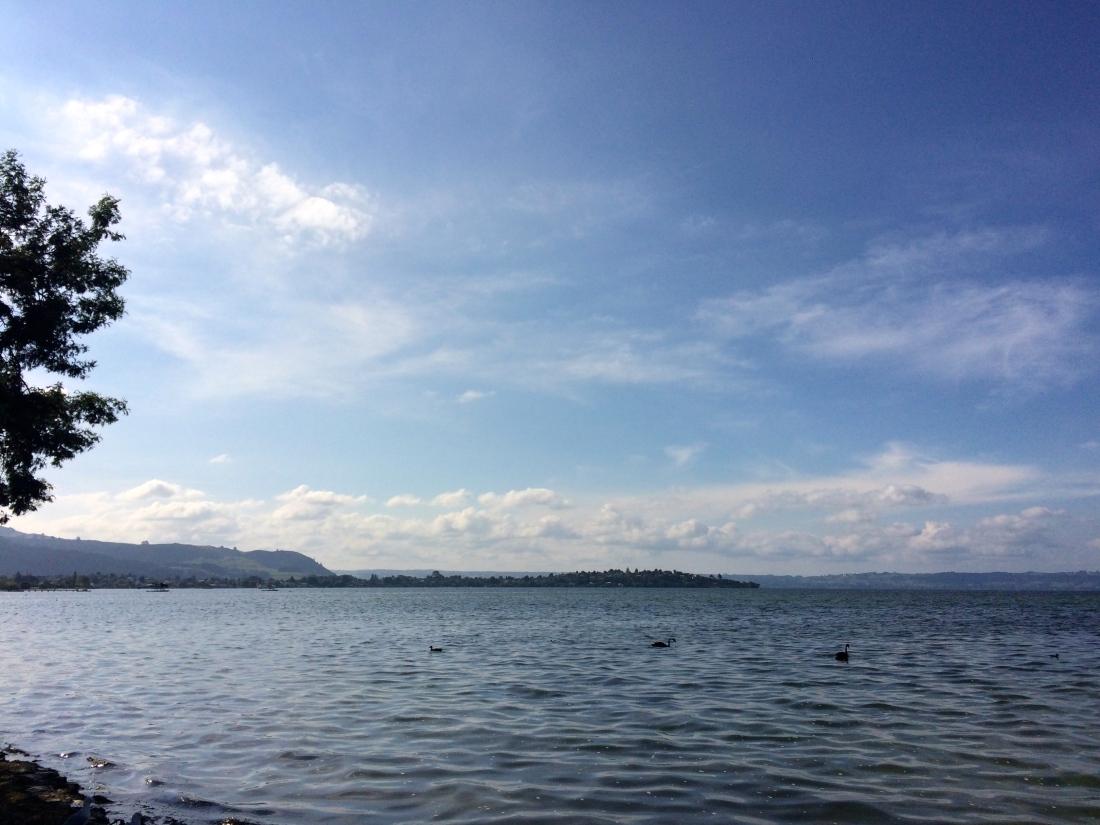 Lake Rotorua Views