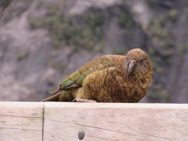 Bird New Zealand