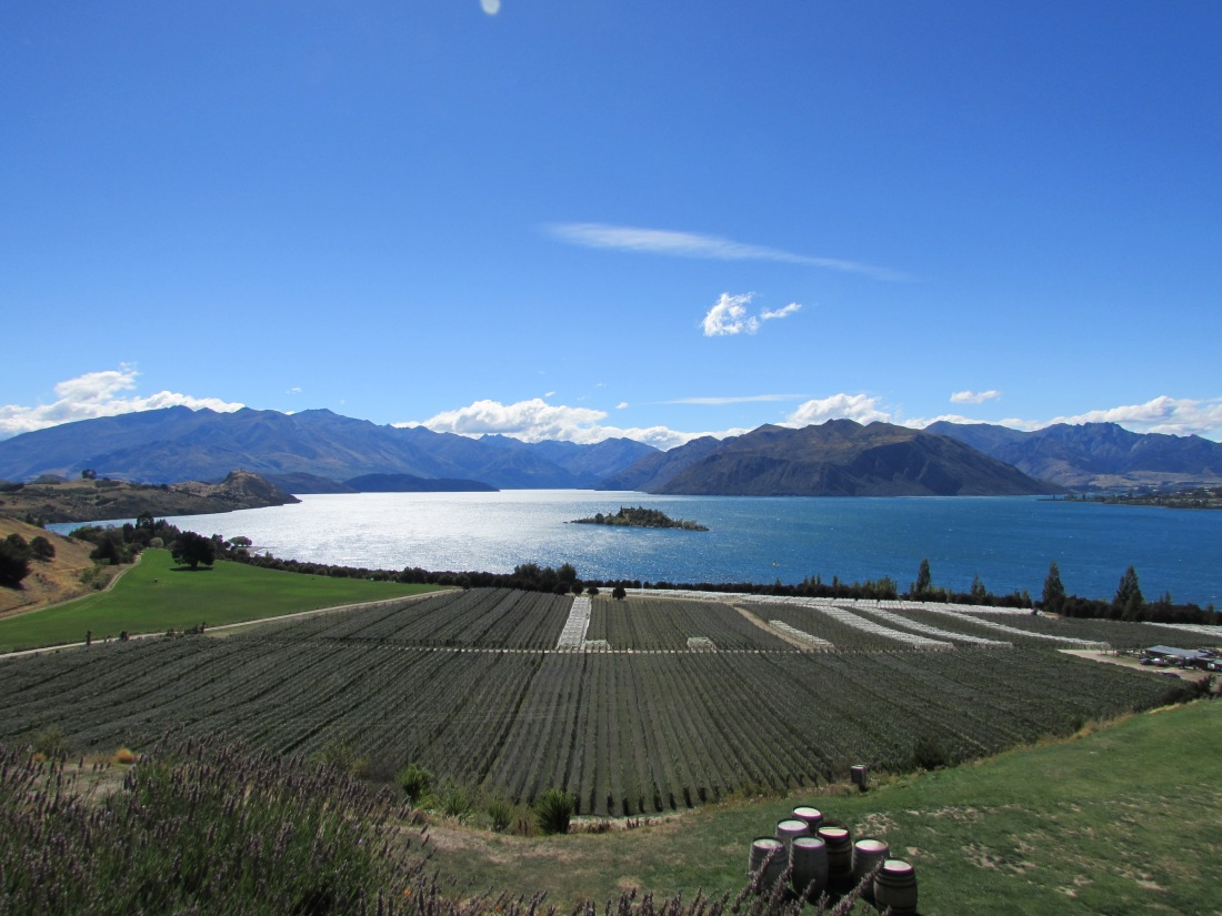 Rippon Winery Grounds